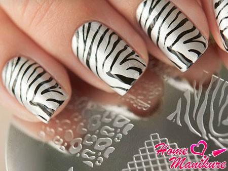 принт зебры на ногтях стемпингом Konad