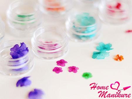 сухоцветы для ногтей